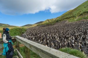 Galapagos of the Southern Ocean: Australia & NZ 's Sub-antarctic Islands - 30 Nov -11 Dec & 11 - 23 DEC 2020 from AUD$11,348 3