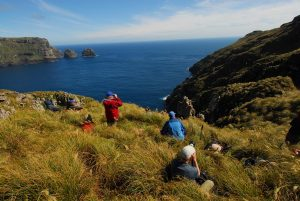Galapagos of the Southern Ocean: Australia & NZ 's Sub-antarctic Islands - 30 Nov -11 Dec & 11 - 23 DEC 2020 from AUD$11,348 7