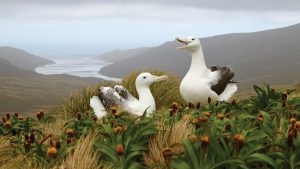 Galapagos of the Southern Ocean: Australia & NZ 's Sub-antarctic Islands - 30 Nov -11 Dec & 11 - 23 DEC 2020 from AUD$11,348 14