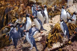Galapagos of the Southern Ocean: Australia & NZ 's Sub-antarctic Islands - 30 Nov -11 Dec & 11 - 23 DEC 2020 from AUD$11,348 15