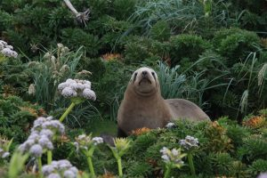 Galapagos of the Southern Ocean: Australia & NZ 's Sub-antarctic Islands - 30 Nov -11 Dec & 11 - 23 DEC 2020 from AUD$11,348 16