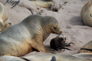 Galapagos of the Southern Ocean: Australia & NZ 's Sub-antarctic Islands - 30 Nov -11 Dec & 11 - 23 DEC 2020 from AUD$11,348 18