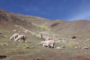 Peru Trekking Guide- More Than Just the Inca Trail 33