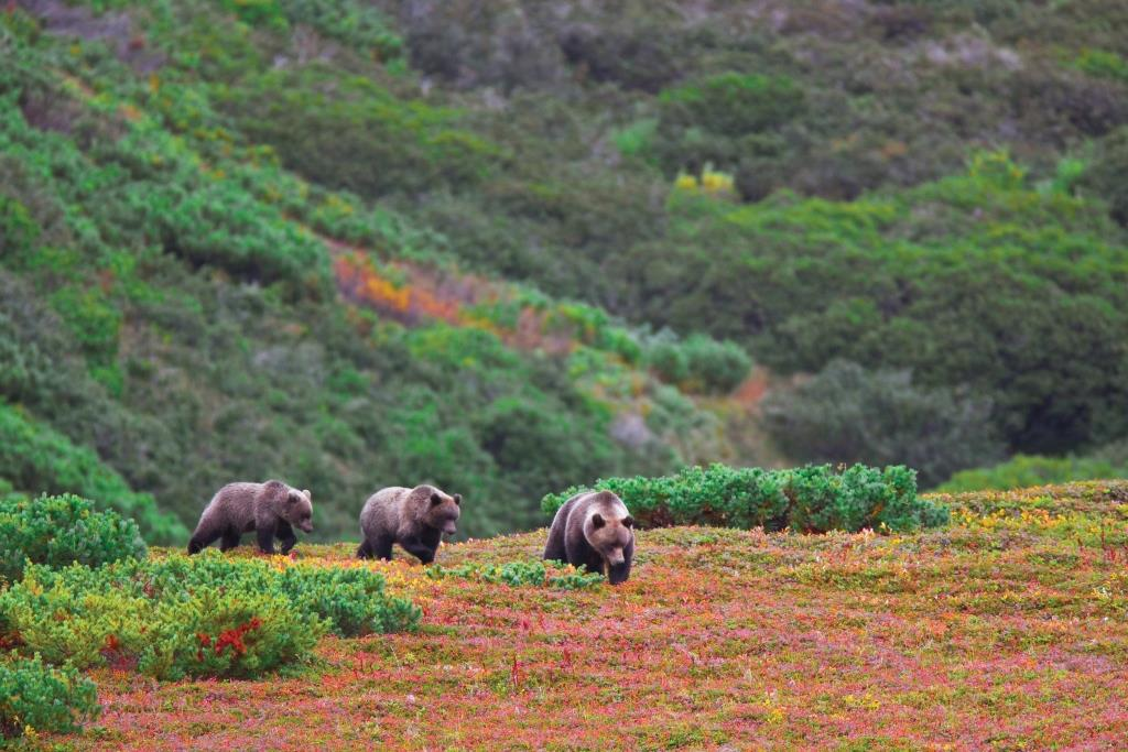 Jewel of the Russian Far East - Kamchatka Peninsula - 30 Aug - 12 Sep 2021 - 13 days from AUD$11,455 2