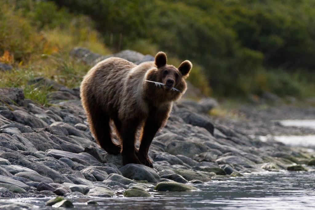 Jewel of the Russian Far East - Kamchatka Peninsula - 30 Aug - 12 Sep 2021 - 13 days from AUD$11,455 5