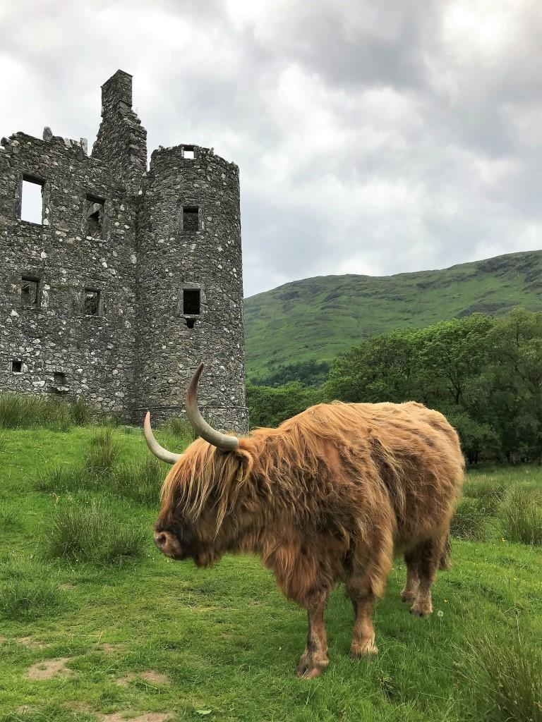Scotland In Depth 2021: An Exclusive Wild Earth Charter - with Aaron Russ -23 May - 4 Jun 2021 13 days from AUD$12,402 4