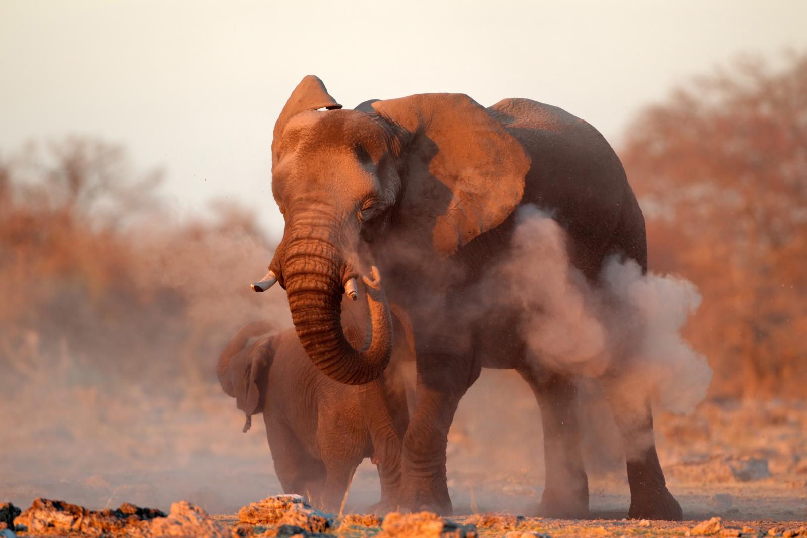 Exodus: Cycle Namibia 12 days from $AUD 3,899 2