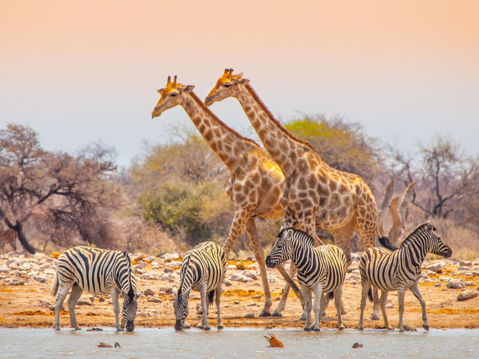 Exodus: Cycle Namibia 12 days from $AUD 3,899 5
