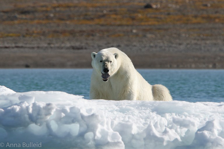 Iceland & the High Arctic (Svalbard, Greenland & Canada) information evening