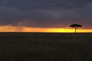 SOLD OUT! Ultimate East Africa Safari - Kenya, Uganda & Rwanda escorted by Anna Bulleid 26 July - 18 August 2020 1
