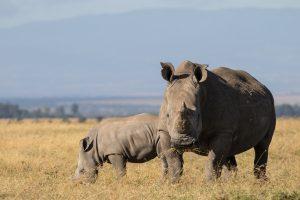 SOLD OUT! Ultimate East Africa Safari - Kenya, Uganda & Rwanda escorted by Anna Bulleid 26 July - 18 August 2020 2