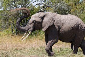 SOLD OUT! Ultimate East Africa Safari - Kenya, Uganda & Rwanda escorted by Anna Bulleid 26 July - 18 August 2020 3