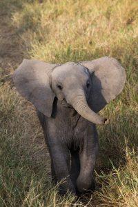 SOLD OUT! Ultimate East Africa Safari - Kenya, Uganda & Rwanda escorted by Anna Bulleid 26 July - 18 August 2020 4