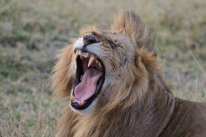 SOLD OUT! Ultimate East Africa Safari - Kenya, Uganda & Rwanda escorted by Anna Bulleid 26 July - 18 August 2020 6