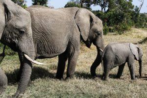 SOLD OUT! Ultimate East Africa Safari - Kenya, Uganda & Rwanda escorted by Anna Bulleid 26 July - 18 August 2020 27