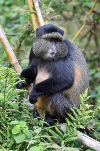 SOLD OUT! Ultimate East Africa Safari - Kenya, Uganda & Rwanda escorted by Anna Bulleid 26 July - 18 August 2020 29
