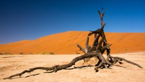 Crooked Compass: Raw Namibia 12 days from $9,986 3