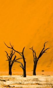 Crooked Compass: Raw Namibia 12 days from $9,986 2