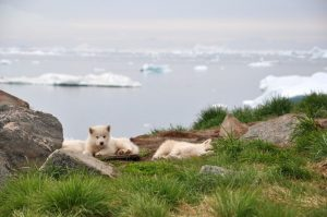 A Taste of Greenland - a 6 day independent tour for 2 or more people from AUD$6,171 5
