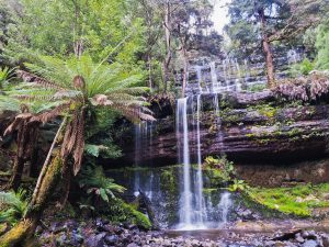 Tasmania's Wild Walks - East, Central & West Tasmania - 07-20 Feb 21; Escorted by Mike Wood. AUD$6,990 ONLY TWO PLACES LEFT! 2