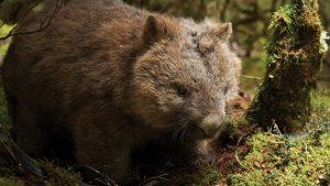Tasmania's Wild Walks - East, Central & West Tasmania - 22 Mar-04 Apr 21; Escorted by Mike Wood. AUD$6,990 22