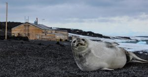In the Wake of Scott and Shackleton: Ross Sea Antarctica - 13 Jan 2021/11 Feb 2021PRICES FROM$23,000 USD 4