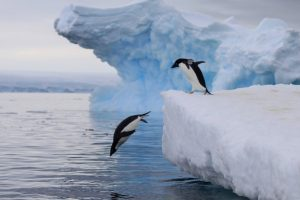 In the Wake of Scott and Shackleton: Ross Sea Antarctica - 13 Jan 2021/11 Feb 2021PRICES FROM$23,000 USD 2