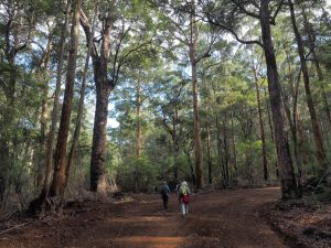 WA's 8-Day Highlights of the Bibbulmun Track tour 14th – 21st September 2020 from $2,600 9