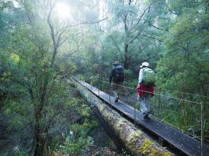 WA's 8-Day Highlights of the Bibbulmun Track tour 14th – 21st September 2020 from $2,600 10