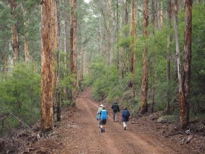 WA's 8-Day Highlights of the Bibbulmun Track tour 14th – 21st September 2020 from $2,600 11