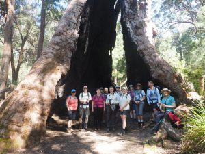 WA's 8-Day Highlights of the Bibbulmun Track tour 14th – 21st September 2020 from $2,600 15