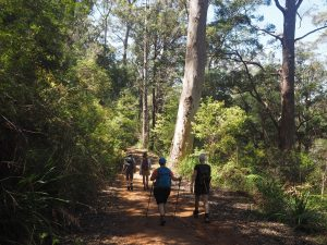 WA's 8-Day Highlights of the Bibbulmun Track tour 14th – 21st September 2020 from $2,600 16
